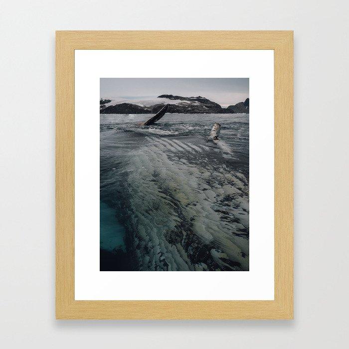 Playful Humpback Framed Art Print