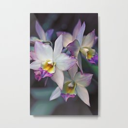 The mystery of orchid 17 Metal Print