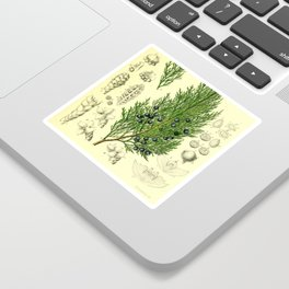 Botanical Juniper Sticker