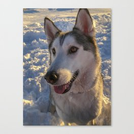 Snow day with the Dog Canvas Print