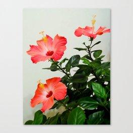 Pink Hibiscus Trio 2 WC Canvas Print