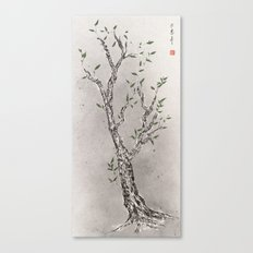 classical chinese medicine Canvas Print