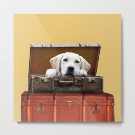 Golden Retriever in old suitcase looking Metal Print