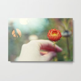 Everlasting Strawflower Metal Print