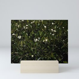 Bonitu i Flores Plumeria Mini Art Print