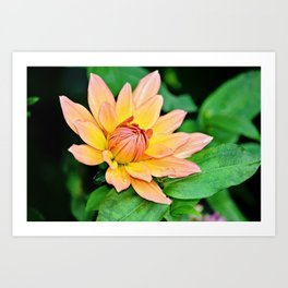 Blooming in Peach and Yellow Art Print