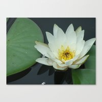 rileigh smirl Canvas Prints featuring Water Lilly by Rileigh Smirl