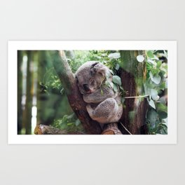 Extremely Sweet Animal Resting Sitting Close Up Ultra Hi Res Art Print