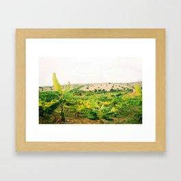 Haiti Banana Fields, Original Fuji Color Framed Art Print