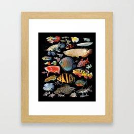 Freshwater tropical fish Framed Art Print
