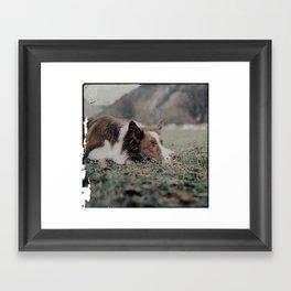 Kiva the dog Framed Art Print