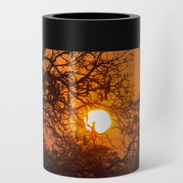Sultry sun setting behind the sausage tree Can Cooler