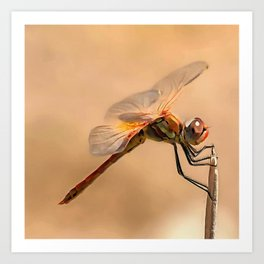 Painted Dragonfly Isolated Against Ecru Art Print