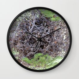 Watercolor Nest, Nest 03, with Witch's Broom, Ouzel Falls Trail, RMNP, Colorado, Darn Phytoplasmas Wall Clock