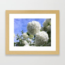 Snowballs Framed Art Print
