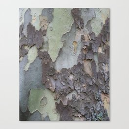 sycamore bark with a green tinge Canvas Print