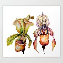 Watercolor Paphiopedilum  Orchids in Vivid Colors Art Print