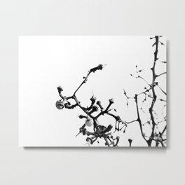 Strange Trees 7 Metal Print