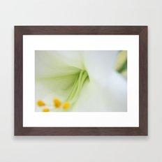 Lily # 2 Framed Art Print