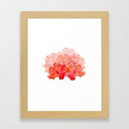 Roses white background Framed Art Print