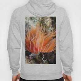 Orange spirograph sailor background   Fond Marin spirographe Hoody