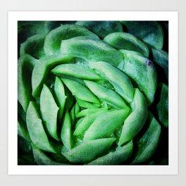 succulent cactus III Art Print