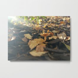 Mushrooms in Dappled Sunlight Metal Print
