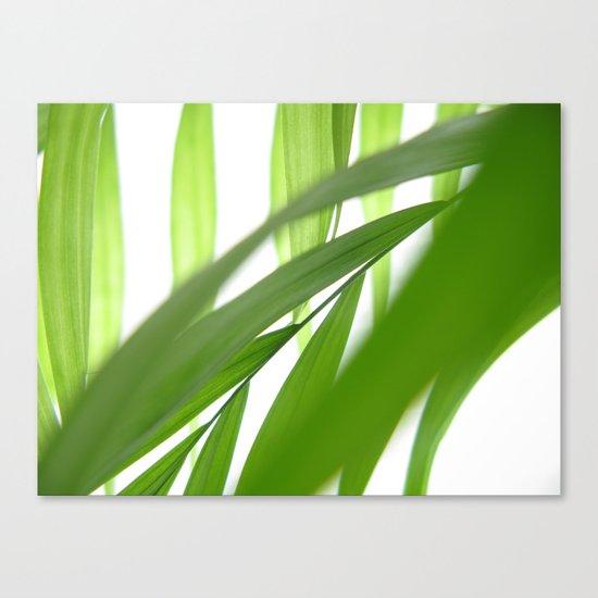 Palm 10 Canvas Print