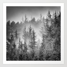 BW. Early moorning... Into the foggy woods Art Print