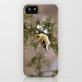 Professor Goldfinch iPhone Case