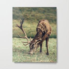 Reindeer Meal and Antlers Metal Print