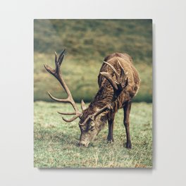 Reindeer Meal and Antlers Metal Print