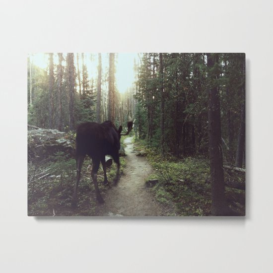 Trail Moose Metal Print