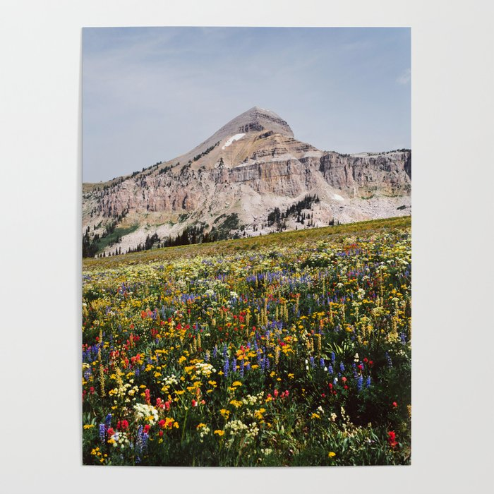 Fossil Mountain Wildflowers Poster