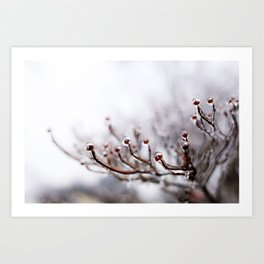 Icy Branches #2 Art Print