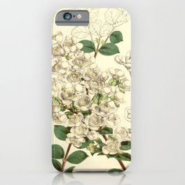 Flower 5040 eugenia luma Pointed leaved Eugenia1 iPhone Case