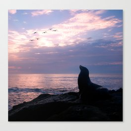 La Jolla Sea Lion Canvas Print