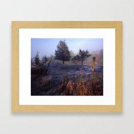 Misty Cedars Framed Art Print