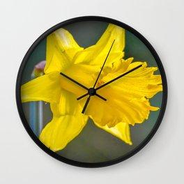 Mylor Walk - Daffodil Wall Clock