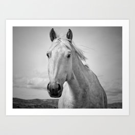 Black and White Horse Photograph Art Print