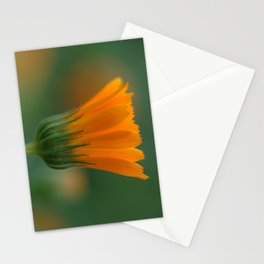 Marigold flower 6 Stationery Cards