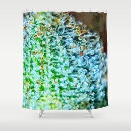 Key Lime Pie Blue Dream Strain Shower Curtain