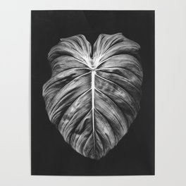 Monstera Deliciosa Black and White Poster
