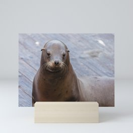 Portrait of a Sea Lion Mini Art Print