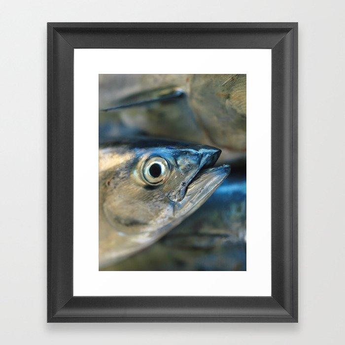 Big eye, tuna, fish, still life, photo, fine art, print, nature, sea ...