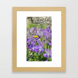 Violets and Dandelions Framed Art Print