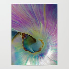 Spiraling Shell Poster