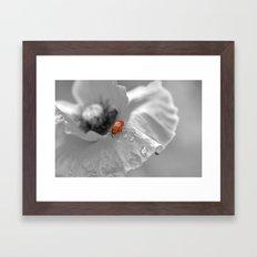 black white poppy with a red ladybug Framed Art Print