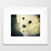 poodle Framed Art Prints featuring Poodle by JMcCool
