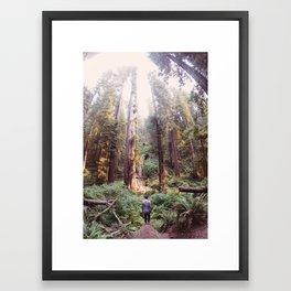 Redwood Dreams Framed Art Print